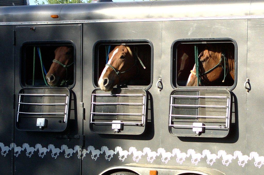 Birdwell Livestock Transport