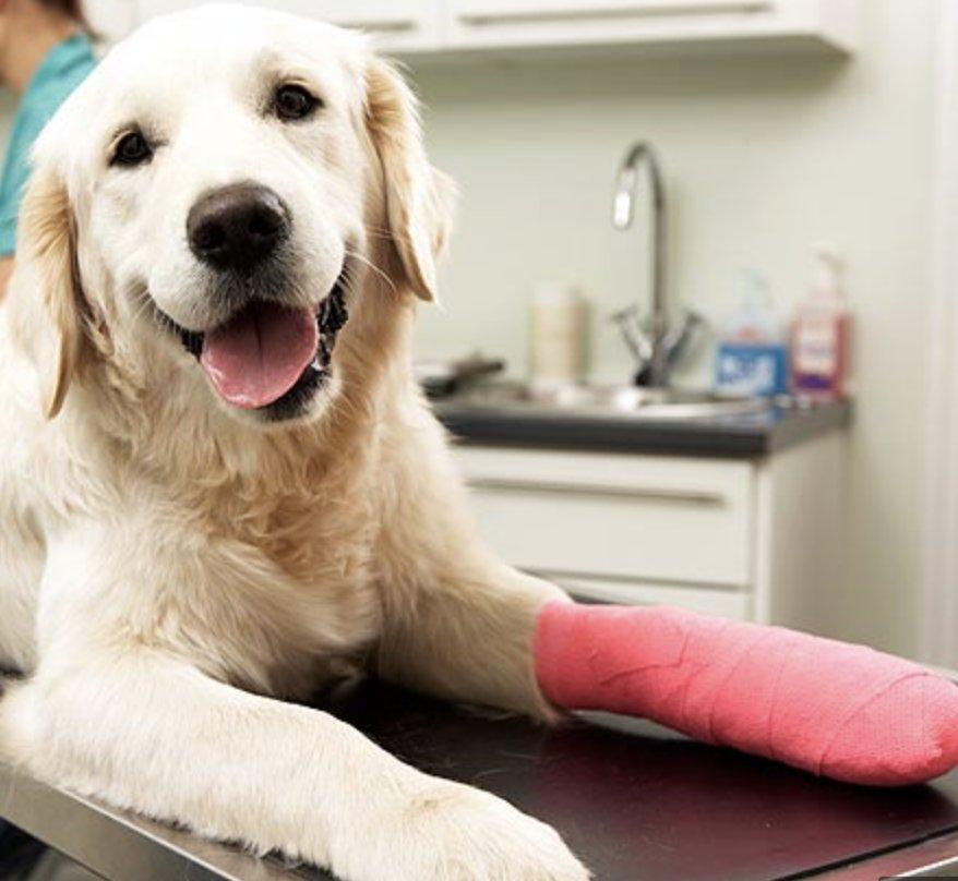 MetroVet - Veterinary Urgent Care