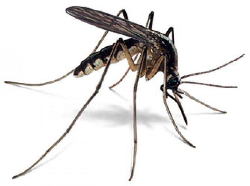 MosquitoGuard Plus, Inc