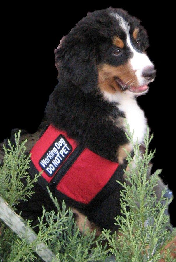 Dee Bogetti, Service Dog Trainer/Consultant