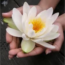Sacred Bloom Organics
