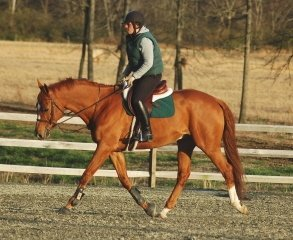East Coast Equestrian