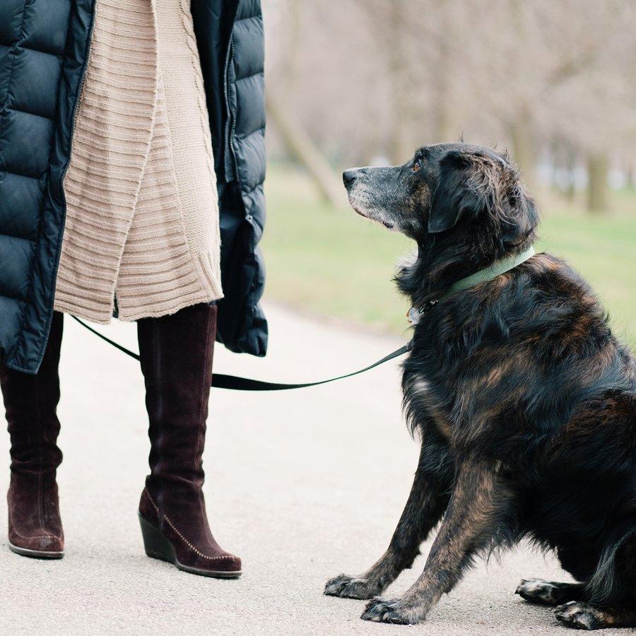 Bondo Dog